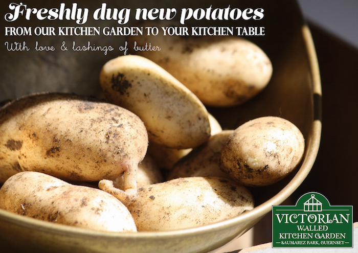 New Potatoes copy for website